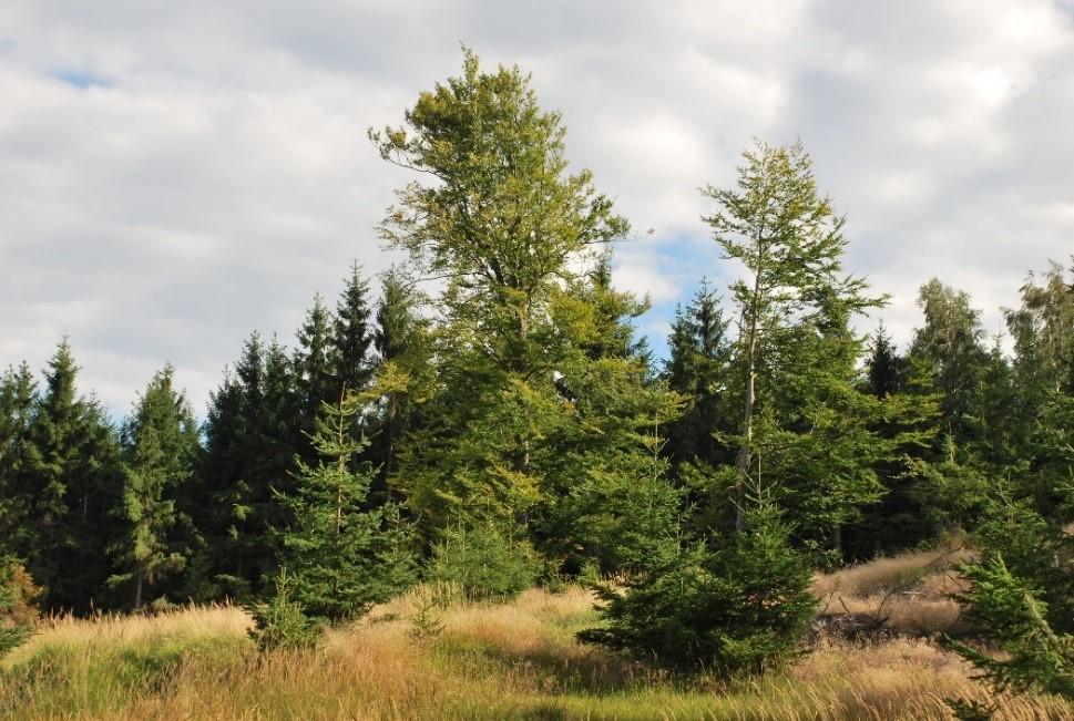 Bild eines Wirtschaftswalds