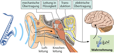 Illustration menschliches Gehör